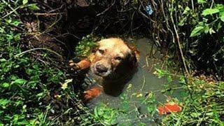 Щенок тонул в болоте , но его вовремя заметил человек