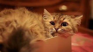 Кошки обожают пакеты и коробки