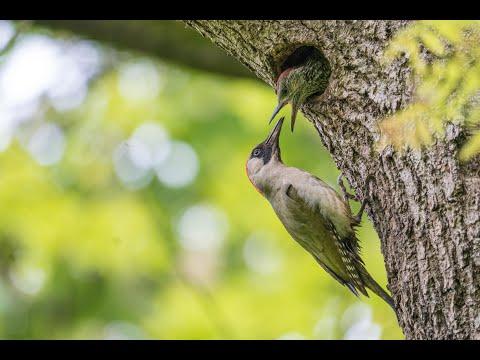 Leben am Spechtbaum