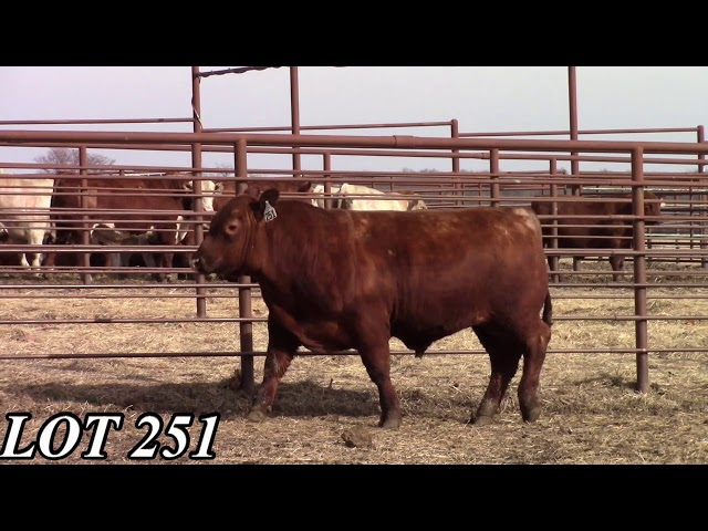 Mead Angus Farms Lot 251