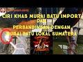 Ini Dia Yang Ditunggu Tunggu Perbedaan Murai Lokal Sumatera Dan Murai Import  Mp3 - Mp4 Download