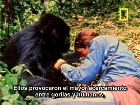 The Lost Film of Dian Fossey (2003). Trailer. Subtitulado al español.