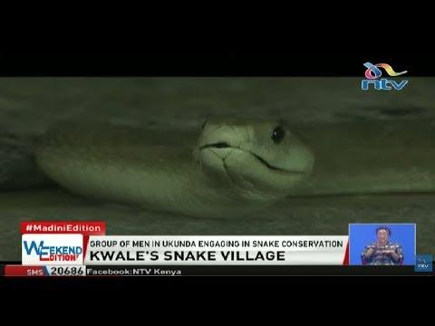 Kwale's snake village: