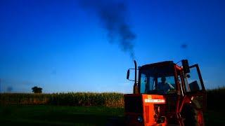 The Best of MTZ! Czyli jedyna taka kukurydza 2019! Dwie sieczkarnie na polu!Łogiń z rury !
