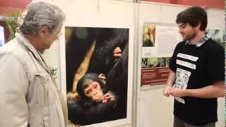 Les chimpanzés de Tanzanie et L'Institut Jane Goodall présentés par PPNat