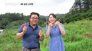 [신젠타코리아] 농부의세계 음성 고추 방문기 영상 🔥🔥
