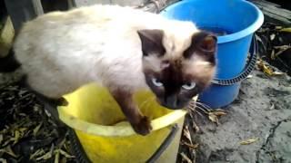 кошка чуть не утопилась в ведре.