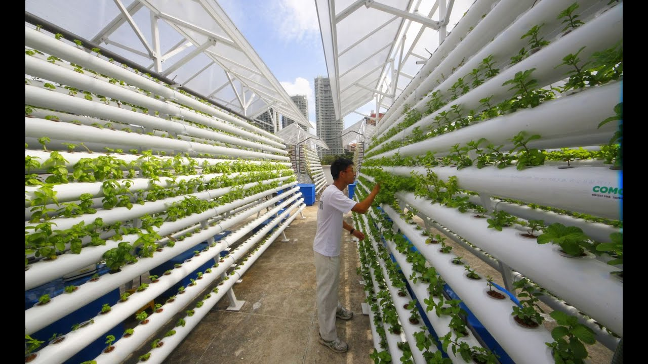 Image result for vertical farming singapore