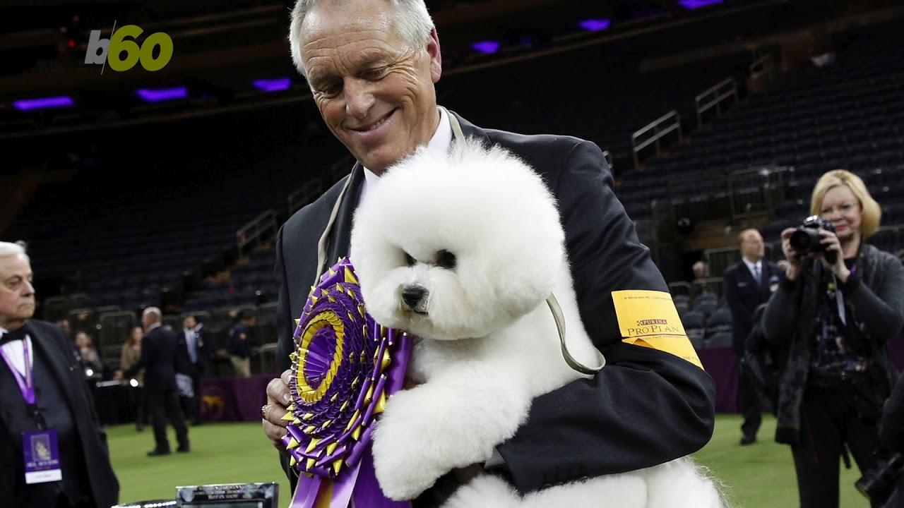 Westminster Dog Show Channel