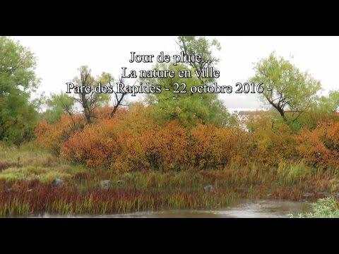 Jour de pluie dans le parc des Rapides, LaSalle ------ 22 octobre 2016 -
