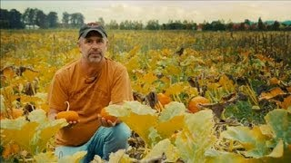 How to Grow Baby Pumpkins : Pumpkin Gardening