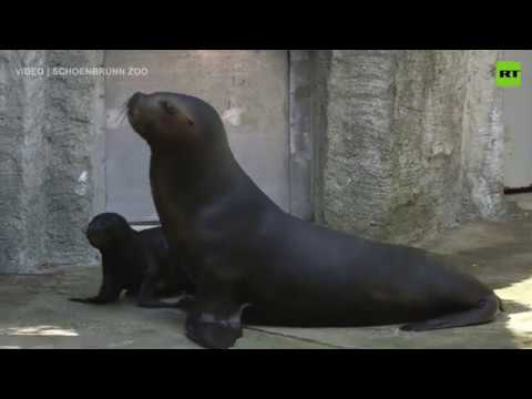 Seal Hello | Vienna zoo debuts latest addition