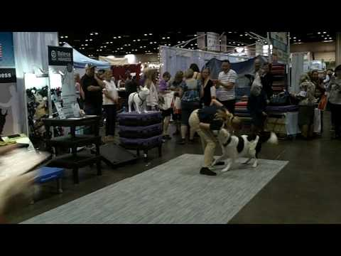 Sara & Hero at the National Dog Show Championships
