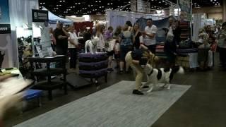 Sara & hero at the national dog show championships