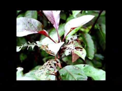 15-108 Science Matters:DDT & Modern Environmental Movement II