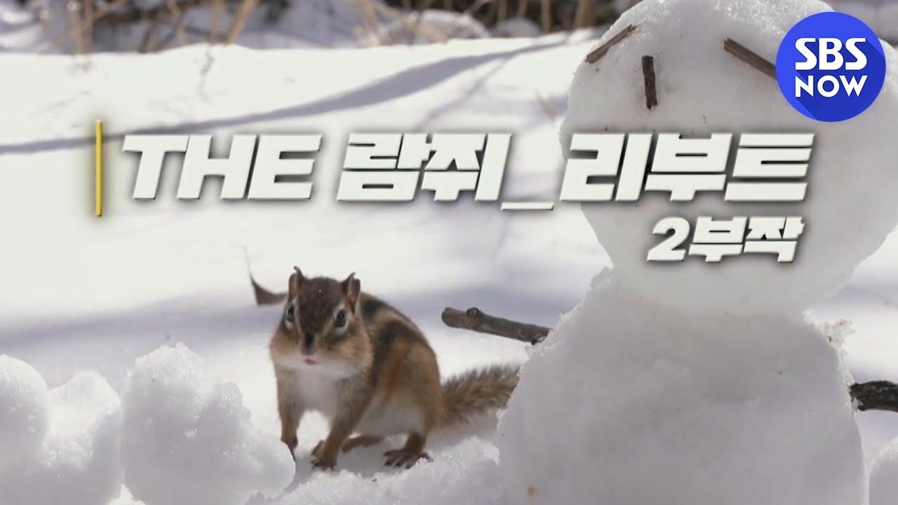 [SBS 스페셜] 티저 'THE 다큐멘터리 'SBS 스페셜' 시즌제로 돌아오다!' / 'SBS Special' Preview   SBS NOW
