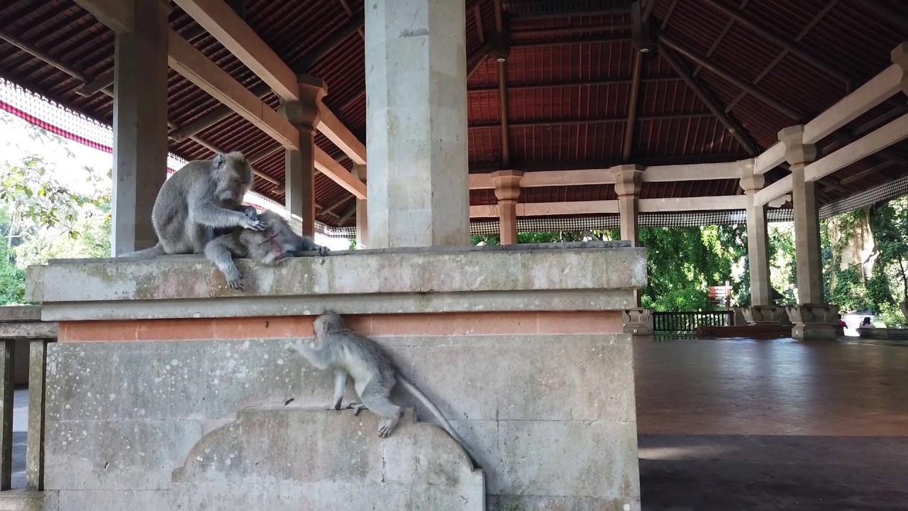 Ubud Monkey Forest 2020