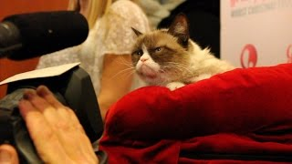 Crave - CNET gets one-on-one time with the famed Grumpy Cat