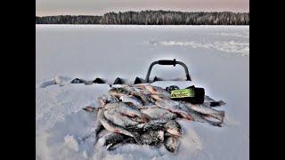 Зимняя рыбалка Муровей Коза Ух этот Мухомормыш ловля рыбы в 35 Уральская зима