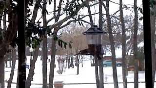 Blue Jay At Bird Feeder On Snowy Day