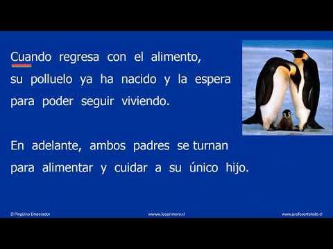 22-el-pinguino-emperador-4-enero-2020