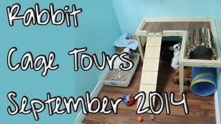 Budgetbunny: First **official** Rabbit Cage Tours | September 2014