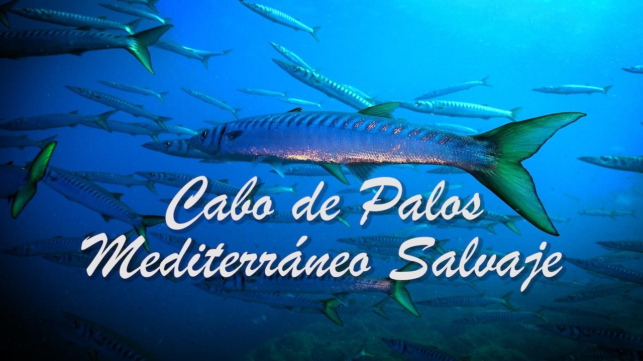 BUCEO EN CABO DE PALOS 🐳 4K *Mediterráneo Salvaje*