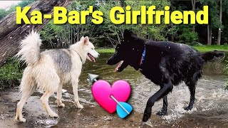 Ka-Bar's Girlfriend - Dog Park Love at 1st Sight - Full Hike