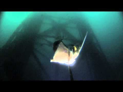Gulf Of Mexico Deep Drop Camera