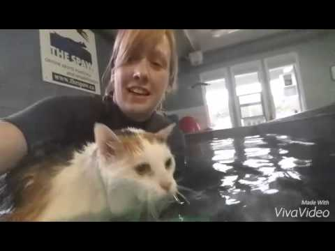 Cat uses Underwater Treadmill and Swimming