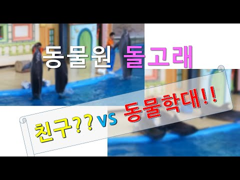 서울대공원 동물원 물개&돌고래 쇼