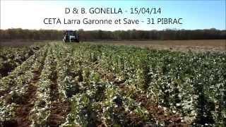 Le tournesol en Agriculture de Conservation chez les adhérents d