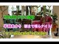 半田あかりの朝まで喋らナイト!in nanairo cafe the Garden