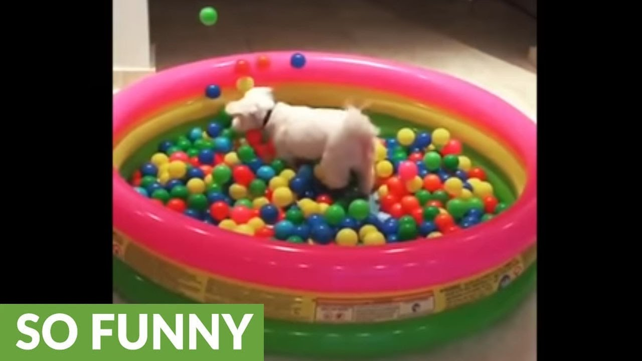 dog-jumps-into-ball-pit-in-epic-slow-motion