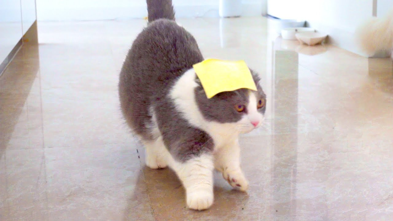 Pranking My Cats With Cheese