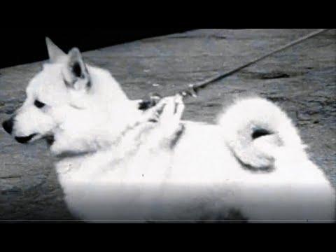 Выставка собак 29 мая 1947 года,Норвегия
