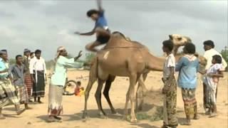 قبيلة الزرانيق اليمنية 🇾🇪