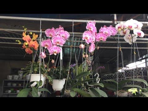 Большой магазин цветов и орхидей во Вьетнаме Нячанг.