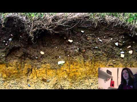 Состав почвы — почвенные минералы, гумус, вода, воздух и живые организмы | AGROPROGNOZ.RU