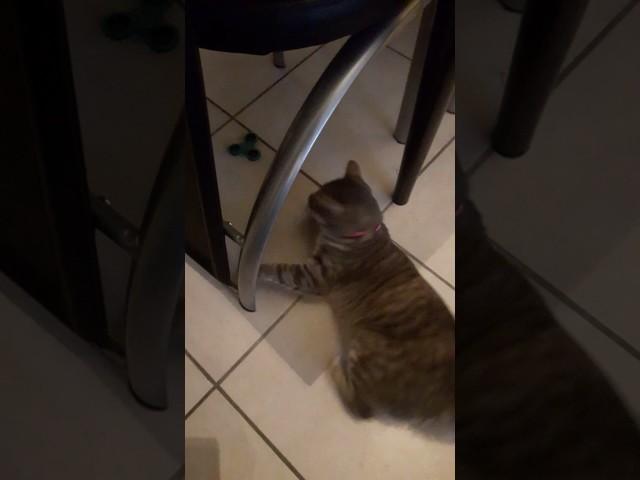cat handspinner