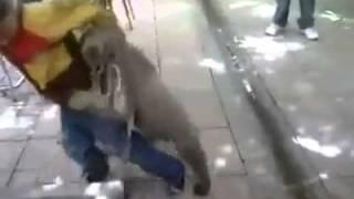 مصارعه بين حيوان وانسان.mp4