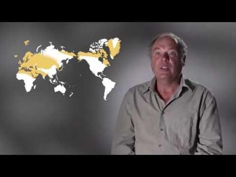 Watch : Le langage : Origine(s) des la...