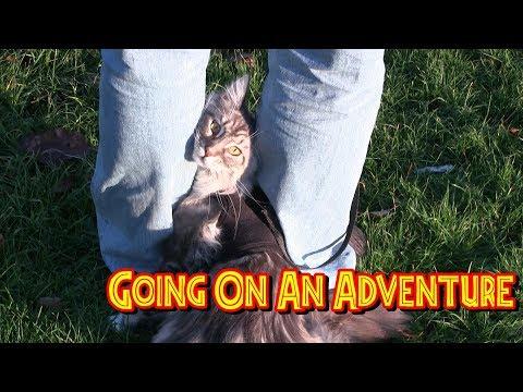 The Kitten Diaries - Going On An Adventure