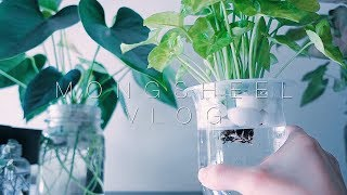 실내 화초 수경재배로 바꾸는법 how to convert indoor plants  into full water culture (ENG SUB)