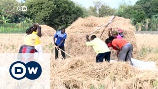 Tanzania: Rice growers hope for boost | DW News