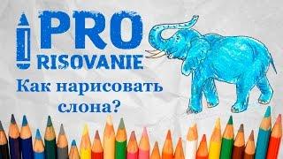 Видеоурок Как нарисовать слона