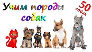 Самые популярные собаки ТОП 50. Учим породы собак (угадай породу собаки). В видео 50 видов собак.