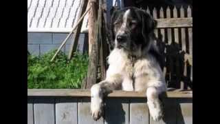 CzŁowiek Pies Zdjecia I Film (pytanie U2-2)