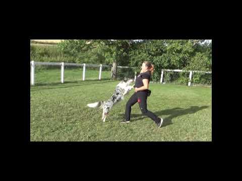 Amazing dog tricks compilation- Daiquiri &  Jennifer Fraser