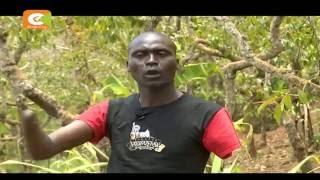 Wengi wamepoteza mikono kwenye mzozo wa mmea huo, Igembe Kaskazini